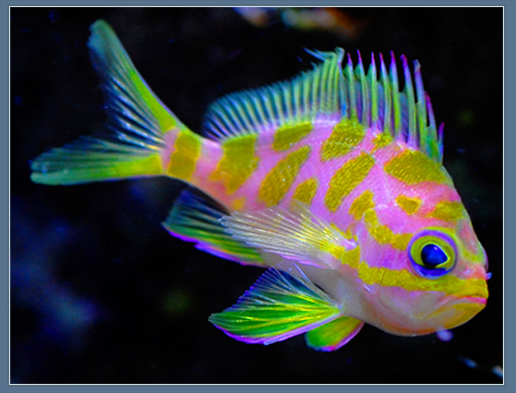 Colorful fish on pinterest beautiful sea creatures for Weird freshwater fish